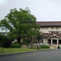 東京国立博物館 平成館 特別展「茶の湯」