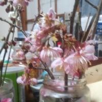 桃色椿。赤い梅、白い梅、八重桜。