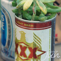 空き缶と多肉植物