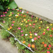 庭に咲く夏の花