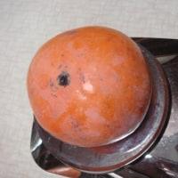 百目柿 (百匁柿) の収穫