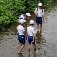 4年生:矢倉川環境調査