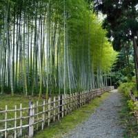 竹林 (万博公園)