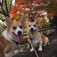 東京のルーク君&ルナちゃん2歳になりました!