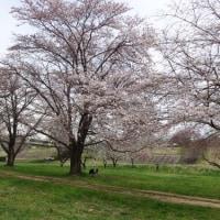 春です!お出掛けの季節