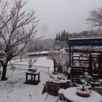 なごり雪・・・なの?!