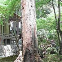 京都・大原三千院-2