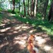 夏の散歩。
