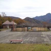 富士川クラフトパークのメタセコイア