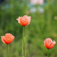 長閑な春の花散歩