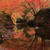 桐生川での紅葉   2016年 (その6)、続・ダム下流での紅葉と映り込み