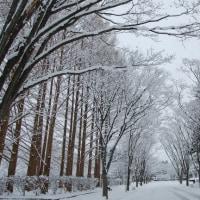 雪の写真をごらんあれ!