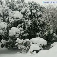 まだ四日市には雪が残っています(>.<)