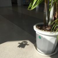 怪しげな影…ハロウィンver.!