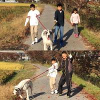 まりちゃんは二人掛かりで散歩