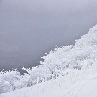 冬の沓掛山へ2・・・【いな】