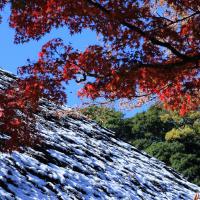 ●鎌倉 円覚寺 紅葉と雪  モミジ 国宝舎利殿 仏殿 山門 百観音霊場 五重塔など