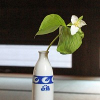 大花延齢草