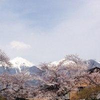 安曇野の宿から・桜見頃