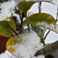 今朝起床時雪が降る