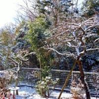 庭の雪景色