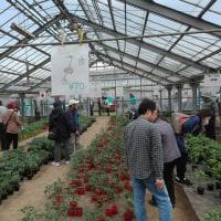 興陽高校の春のフェスタで野菜苗購入