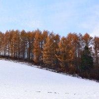 雪景色とカラマツの黄葉