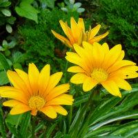 我が家の名残の庭の花