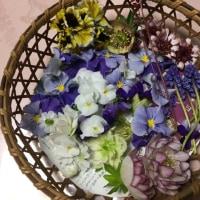 マイガーデンの花を押し花に