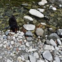 ぶなの湯横の川で遊ぶ