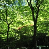 大矢田神社・美濃国