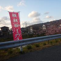 千葉県鋸南町桜まつり