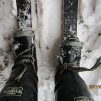 雪原の散歩