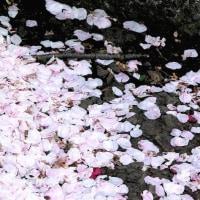「写真&俳句!」 散り敷きて風にまた発つ花の色