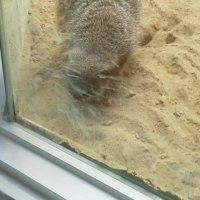 円山動物園に「ジョジョ」現る?!Σ(´∀`;)  札幌まちなか探検隊続き