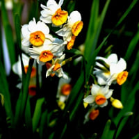 寒いのが大好きな庭の花