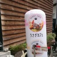 ハリネズミカフェ~癒されます(*^^*)
