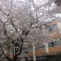 桜花爛漫の入学式
