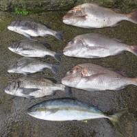 水温19℃海は澄んで潮が早かった、夜釣りで釣果が60cm台の真鯛3尾