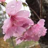 桜満開の真岡路へ③~おまけの写真館