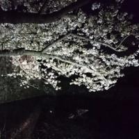 2017年 さくら その2 舞鶴公園・平和台