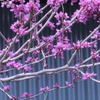 白い花と木の葉の影  常西寿会総会
