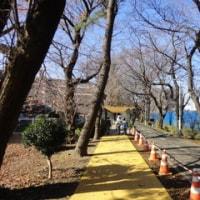 小春日和の多摩湖自転車道