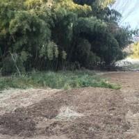 押し寄せる竹