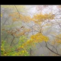 霧の雑木林