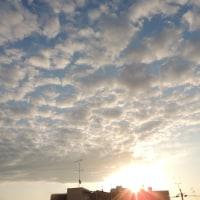 羊雲の出た朝