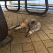 今日の大学のネコは、暑い