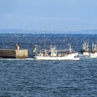 羅臼前浜のイカ漁