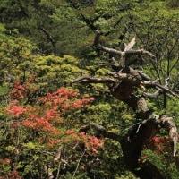 六甲山 山の芸術