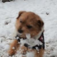 雪だー!NFTダルマだー!